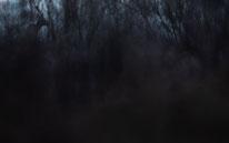 Reh, vogel-naturfoto, Sebastian Vogel