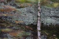 Pfälzerwald, birke, sandstein, sebastian vogel