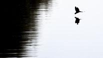 Sebastian Vogel, naturfotografie, vogel-naturfoto, schwalbe, vogel, rheinhessen