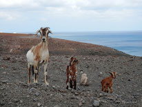 vacanze a fuerteventura isole canarie