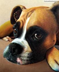 peinture-chien