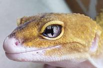 Partial Snake Eye