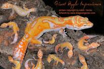 Hyglo - SHT Tremper Albino