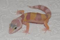 Rainwater Albino Baby