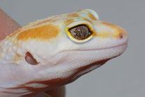 W&Y Tremper Albino Auge (Lidstrich)