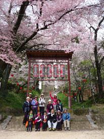 飯沼神社の石段桜。4/10には、御柱柱祭りが行われます。準備が進んでいました。