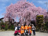 黄梅院の桜の前で、「はい!チーズ!!」ここの桜は色が濃く鮮やかです。