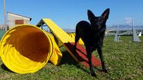 Addestramento cani Viareggio , agility dog Viareggio , addestratore ENCI , centro cinofilo Versilia , educazione cani , cuccioli , socializzazione , recupero comportamentale , Corsi agility dog Versilia , massarosa , lido di camaiore , lucca
