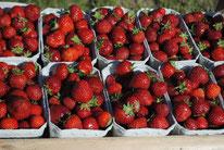 Erdbeeren jembke Brackstedt Erdbeerfeld