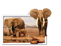 Out of Bound. Olifant Annabel