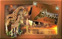 Creatie Giraffe Marius
