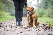 Hund zeigt den Fund von Fressbarem auf Spaziergang an