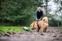 Hund findet Fressbares bei Spaziergang