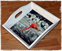 Fotos auf Tabletts aufbringen