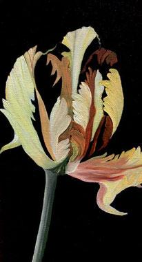 Andrea Maci, tulipano, 2020, 24×18cm, Ausschn., Öl auf Leinwand
