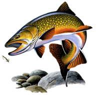 sweat capuche homme pêcheur de truite saumonée
