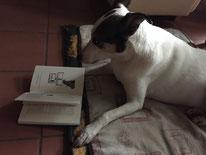 Bild: Joey liest ein Buch; Smeura Rumänien, Tierhilfe Hoffnung, Tierheim Bielefeld