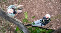 Les Tas De Nature, grimpe d'arbres à Sauvagnon, deux personne un homme une femme, dans un arbre
