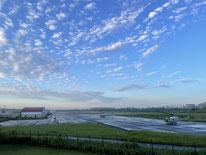 今週の1景(2月22日~2月28日)     満開の梅:桜よりも古くから日本人に好まれてきたという梅。梅干しは疲労回復や抗菌にも効果があり、おにぎりの必需品ですね(野川公園にて)