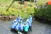 橋の下での鮭の捕獲
