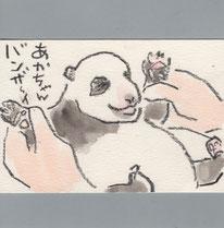 パンダ 赤ちゃん バンザイ