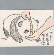 パンダ 80日目の測定