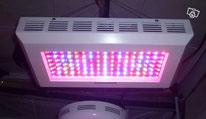 LED lampes horticole, éclairage jardin interieur