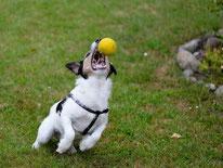 Spaß- und Spielkurs für Hunde