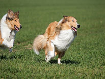 Anti-Jagd-Kurs für Hunde