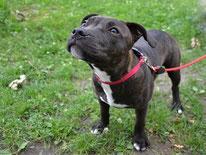 Hundetraining bei Leinenaggressionen