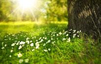 erden & gräser