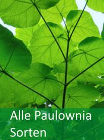 Baumarten - P. Forstpflanzen