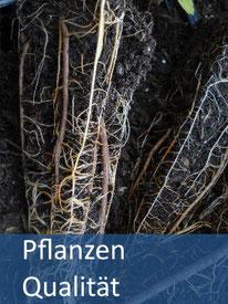Pflanzen - Aufforstung