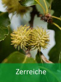 Baumarten  Zerreiche