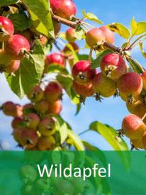 Baumart - Wildapfel