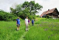WT Kallmünz: Blumenmeer
