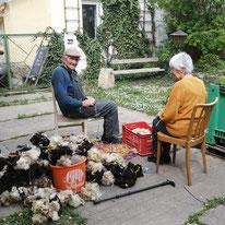 Schafwolle vorbereiten gegen Wildverbiss