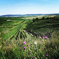 Pulkautal im Weinviertel