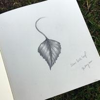 Birch Leaf Sketch Drawing