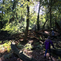 New Forest Exploring