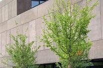 Stelen, Naturstein, Sichtschutz, , Amriswil, Gartenbau, Gärtner, Gartengestaltung, Lorandi