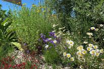 Gabionen, Steinkörbe, Eisen, Sichtschutz, , Amriswil, Gartenbau, Gärtner, Gartengestaltung, Lorandi