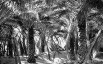 Oasis - El Oued