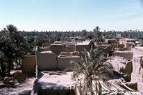 Oasis - Sidi Okba