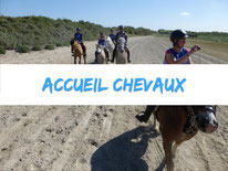 chevaux-pature-camping-la-haie-penee-baie-de-somme-picardie-marquenterre-plage-mer-balade-location