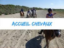 chevaux-pature-camping-la-haie-penee-baie-de-somme-picardie-marquenterre-plage-mer-balade-location