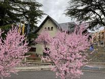 Frühling in den Pyrenäen (Aragon)