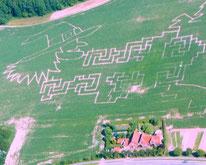 Maislabyrinth Sieversdorf