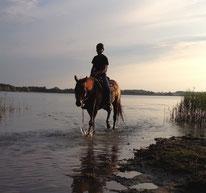 Die Pferdebadestelle am Lanker See