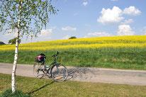 Fahrrad vor Rapsfeld
